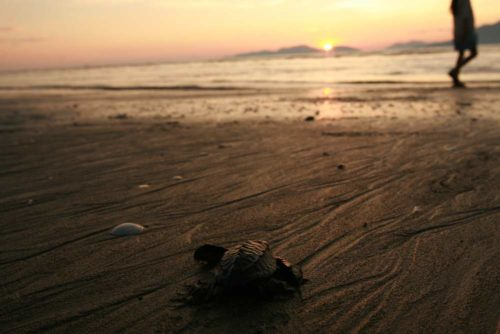 nota-tortugas-portada-web
